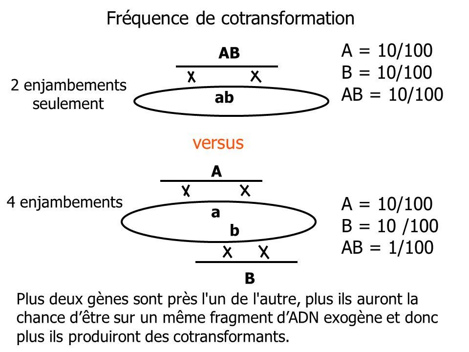 Plus deux gènes sont près l'un de l'autre, plus ils auront la chance dêtre sur un même fragment dADN exogène et donc plus ils produiront des cotransfo