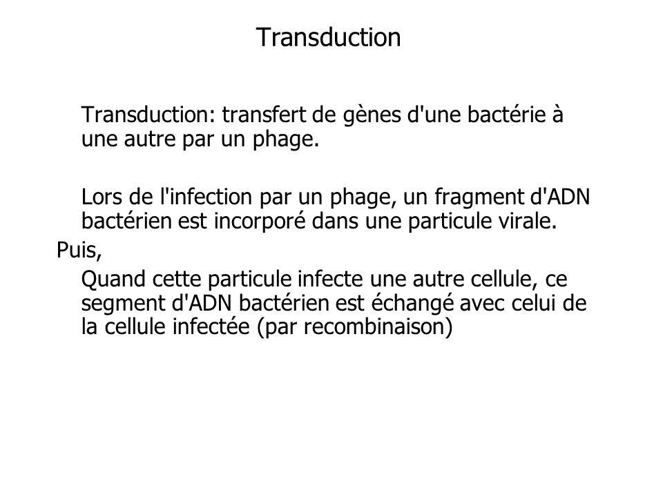 Transduction Transduction: transfert de gènes d'une bactérie à une autre par un phage. Lors de l'infection par un phage, un fragment d'ADN bactérien e
