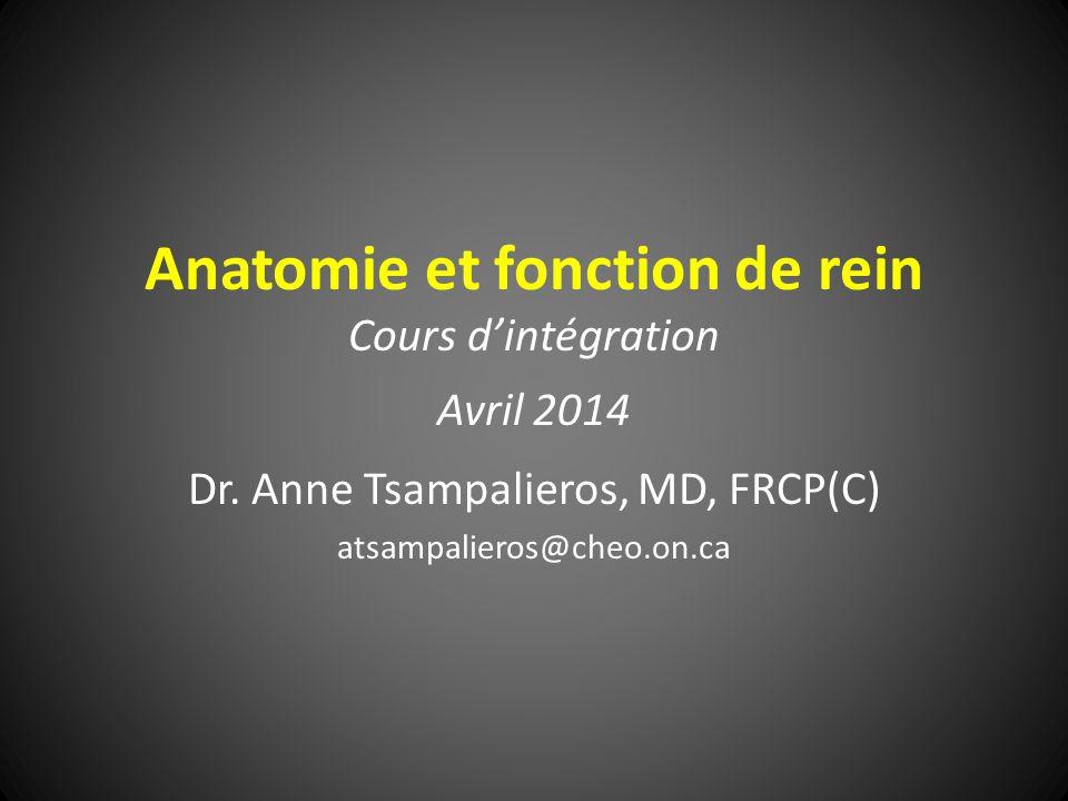 Anatomie et fonction de rein Cours dintégration Avril 2014 Dr.