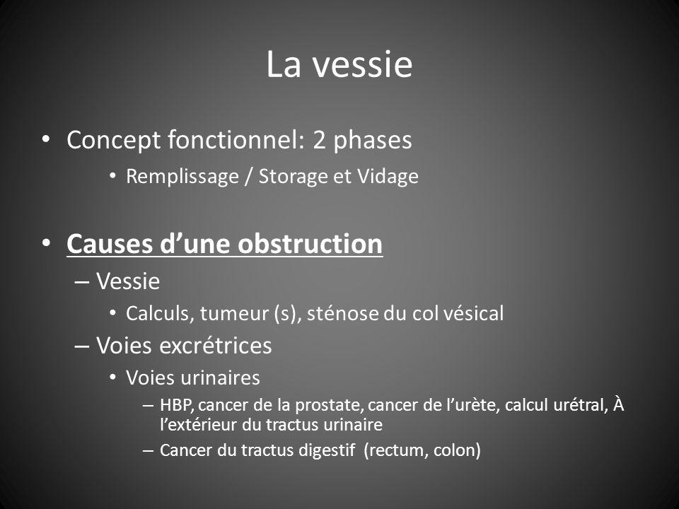 La vessie Concept fonctionnel: 2 phases Remplissage / Storage et Vidage Causes dune obstruction – Vessie Calculs, tumeur (s), sténose du col vésical – Voies excrétrices Voies urinaires – HBP, cancer de la prostate, cancer de lurète, calcul urétral, À lextérieur du tractus urinaire – Cancer du tractus digestif (rectum, colon)