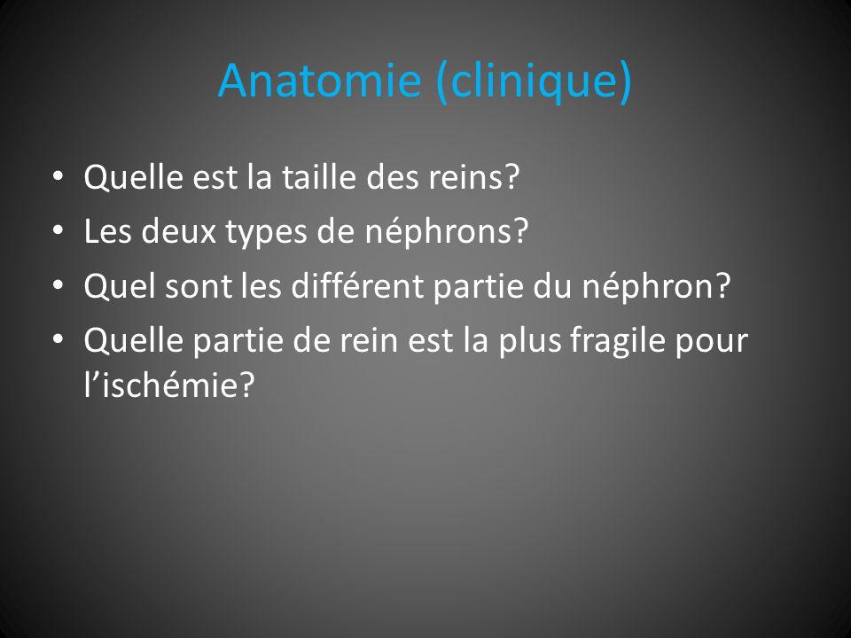 Anatomie (clinique) Quelle est la taille des reins.
