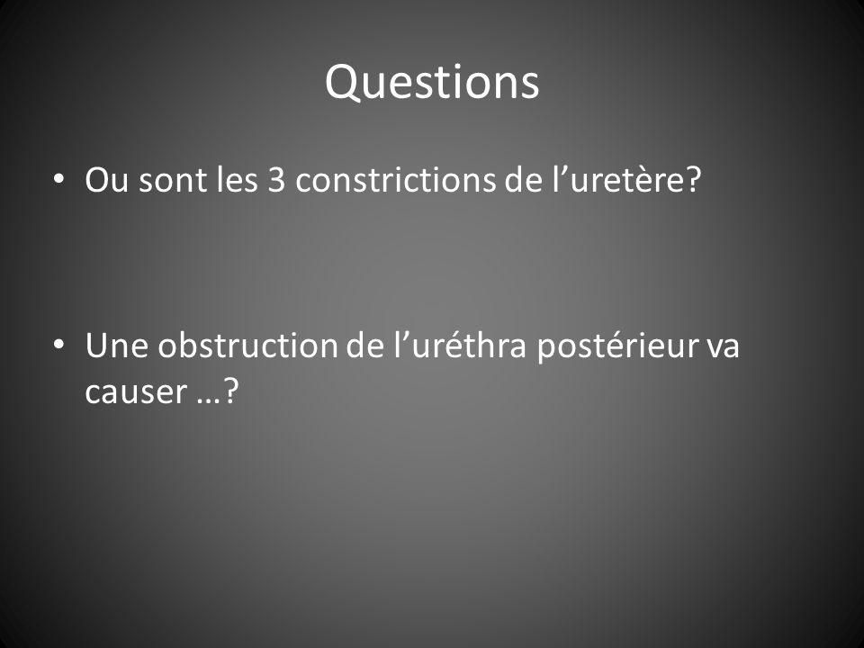 Questions Ou sont les 3 constrictions de luretère.