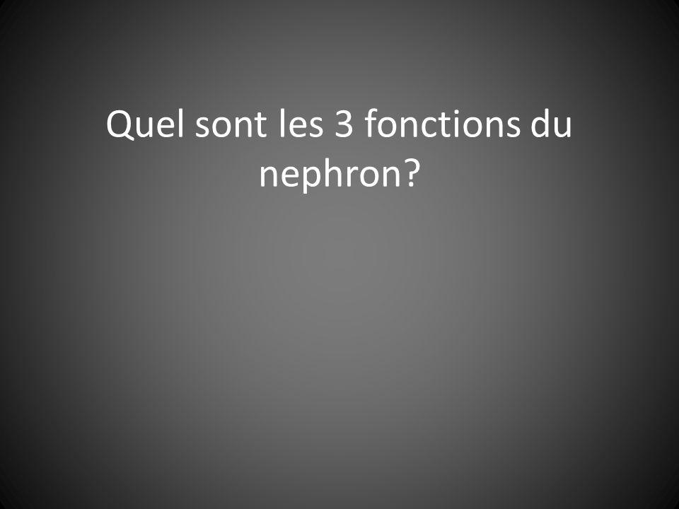 Quel sont les 3 fonctions du nephron?