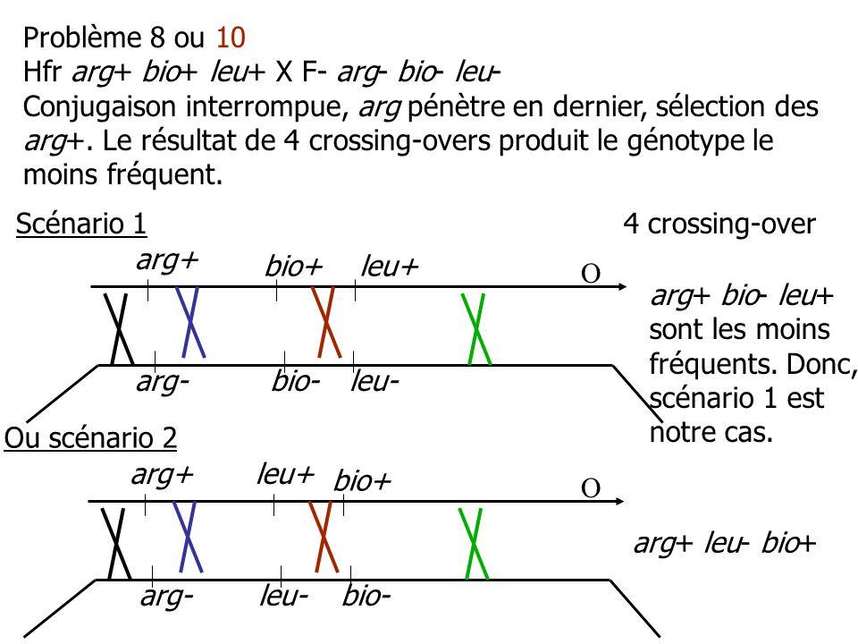 arg+ arg-bio- bio+leu+ leu- arg+ arg-bio- bio+ leu+ leu- Problème 8 ou 10 Hfr arg+ bio+ leu+ X F- arg- bio- leu- Conjugaison interrompue, arg pénètre