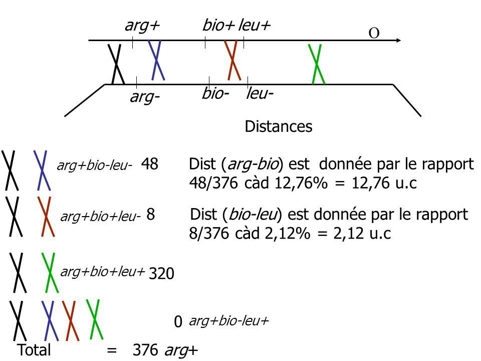 arg+ arg- bio- bio+leu+ leu- 48 Dist (arg-bio) est donnée par le rapport 48/376 càd 12,76% = 12,76 u.c 8 Dist (bio-leu) est donnée par le rapport 8/37
