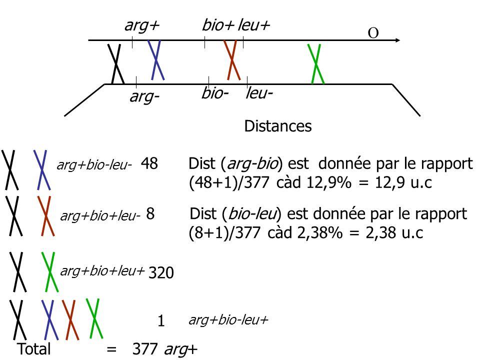 arg+ arg- bio- bio+leu+ leu- 48 Dist (arg-bio) est donnée par le rapport (48+1)/377 càd 12,9% = 12,9 u.c 8 Dist (bio-leu) est donnée par le rapport (8+1)/377 càd 2,38% = 2,38 u.c 320 1 Total = 377 arg+ Distances O arg+bio-leu- arg+bio+leu- arg+bio+leu+ arg+bio-leu+