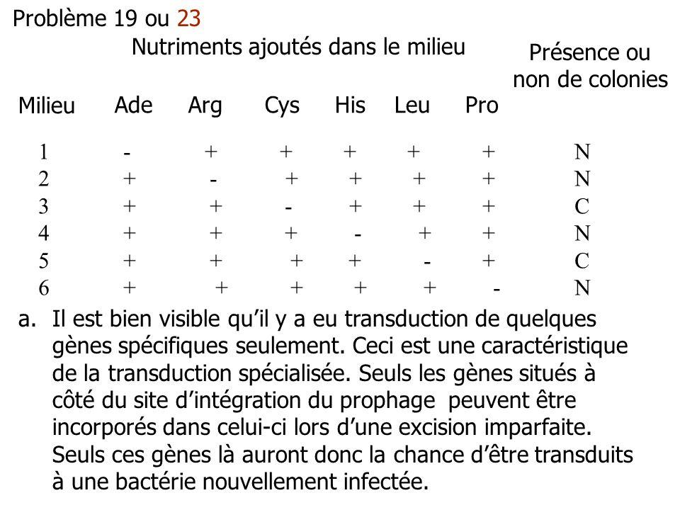 Problème 19 ou 23 Milieu Nutriments ajoutés dans le milieu Présence ou non de colonies Ade Arg Cys His Leu Pro 1 - + + + + + N 2 + - + + + + N 3 + + - + + + C 4 + + + - + + N 5 + + + + - + C 6 + + + + + - N a.Il est bien visible quil y a eu transduction de quelques gènes spécifiques seulement.
