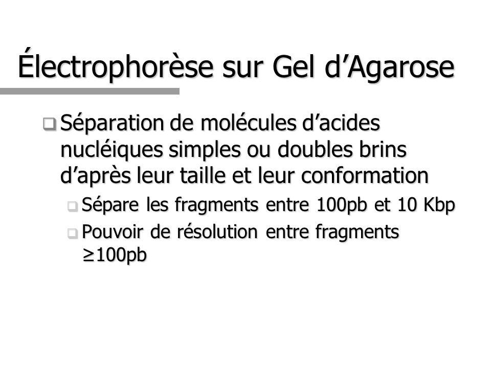 Électrophorèse sur Gel dAgarose Séparation de molécules dacides nucléiques simples ou doubles brins daprès leur taille et leur conformation Séparation