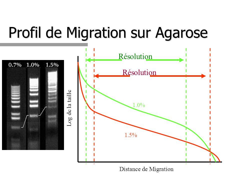Profil de Migration sur Agarose Distance de Migration Log de la taille 1.0% 1.5% Résolution