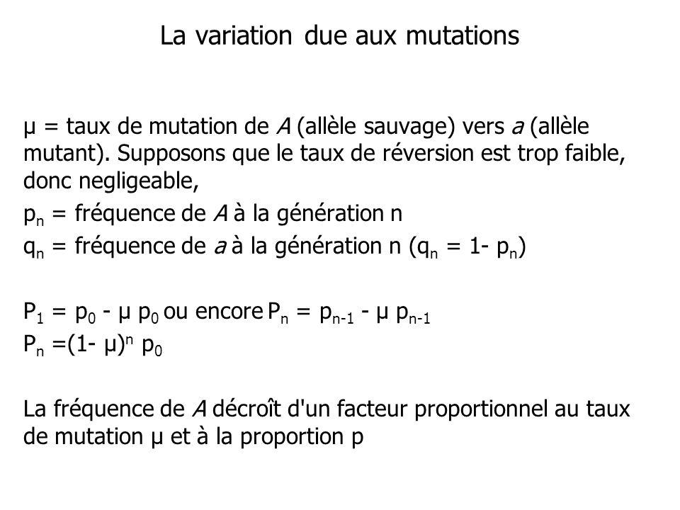 Exemple: 10 individus migrent dune population où la fréquence dun allèle A est de 100% vers une population de 90 individus où la fréquence de cet allèle A est de 50% * Nous avons p d =1.0, p r = 0.5 et m = 0.1 p r+1 = p r + m (p d - p r ) p r+1 = (1- 0.1) 0.5 + 0.1 x 1 = 0.55 Ou p r+1 = 0.5 + 0.1 (1 - 0.5) = 0.55 La fréquence de lallèle A dans la population réceptrice a augmenté de 50 % à 55 %