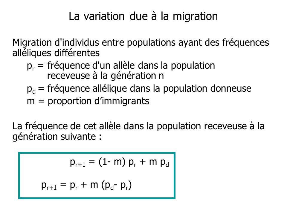 La variation due à la migration Migration d individus entre populations ayant des fréquences alléliques différentes p r = fréquence d un allèle dans la population receveuse à la génération n p d = fréquence allélique dans la population donneuse m = proportion dimmigrants La fréquence de cet allèle dans la population receveuse à la génération suivante : p r+1 = (1- m) p r + m p d p r+1 = p r + m (p d - p r )