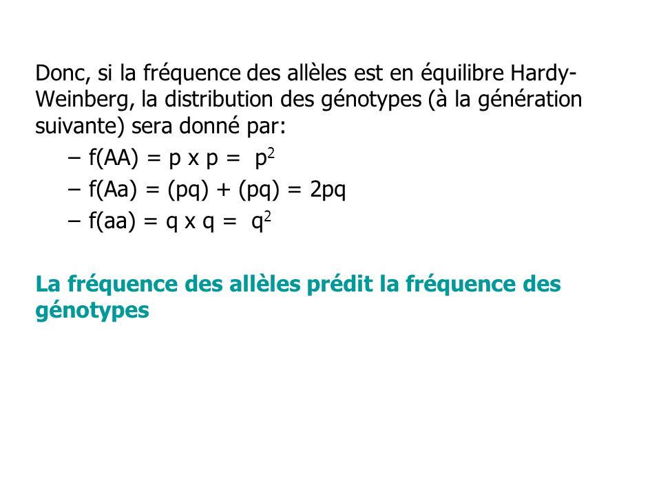 Donc, si la fréquence des allèles est en équilibre Hardy- Weinberg, la distribution des génotypes (à la génération suivante) sera donné par: –f(AA) = p x p = p 2 –f(Aa) = (pq) + (pq) = 2pq –f(aa) = q x q = q 2 La fréquence des allèles prédit la fréquence des génotypes