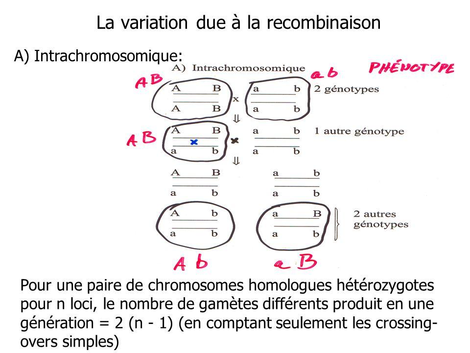 La variation due à la recombinaison Pour une paire de chromosomes homologues hétérozygotes pour n loci, le nombre de gamètes différents produit en une génération = 2 (n - 1) (en comptant seulement les crossing- overs simples) A) Intrachromosomique: