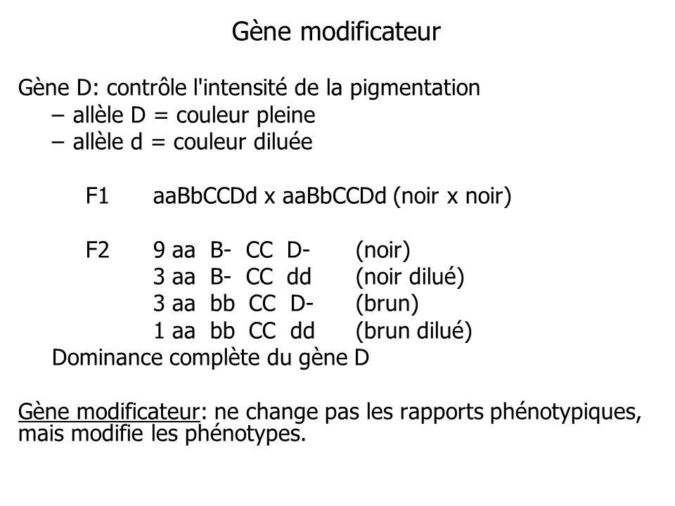 Gène D: contrôle l'intensité de la pigmentation –allèle D = couleur pleine –allèle d = couleur diluée F1aaBbCCDd x aaBbCCDd (noir x noir) F29 aa B- CC