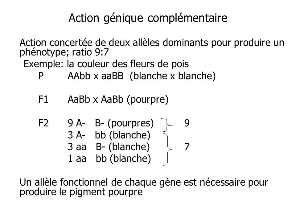 Action génique complémentaire Action concertée de deux allèles dominants pour produire un phénotype; ratio 9:7 Exemple: la couleur des fleurs de pois
