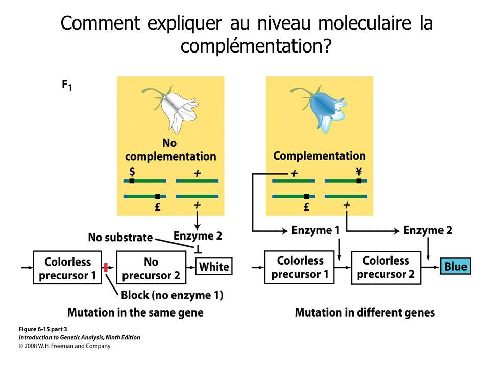 Comment expliquer au niveau moleculaire la complémentation?