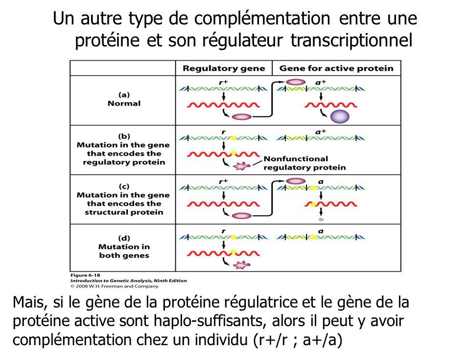 Un autre type de complémentation entre une protéine et son régulateur transcriptionnel Mais, si le gène de la protéine régulatrice et le gène de la pr