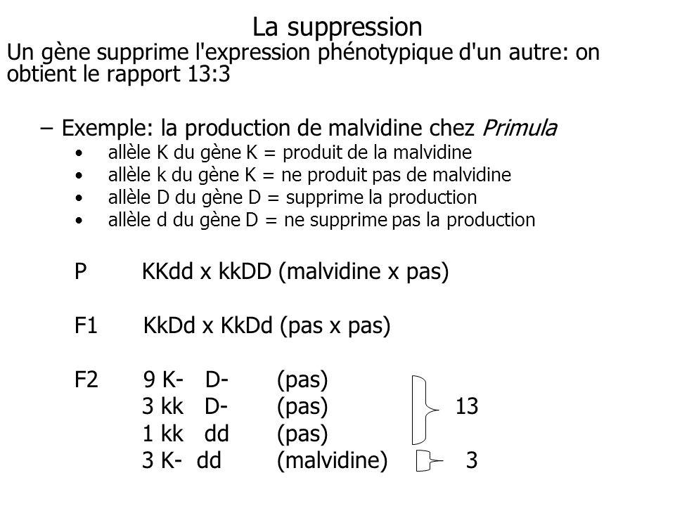 La suppression Un gène supprime l'expression phénotypique d'un autre: on obtient le rapport 13:3 –Exemple: la production de malvidine chez Primula all