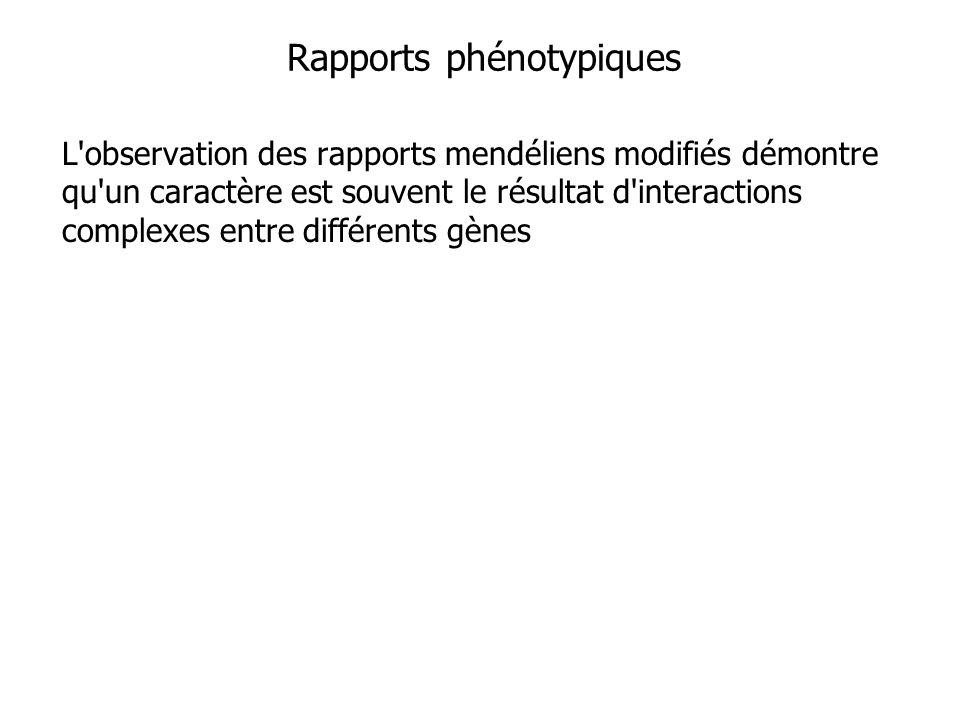 Rapports phénotypiques L'observation des rapports mendéliens modifiés démontre qu'un caractère est souvent le résultat d'interactions complexes entre