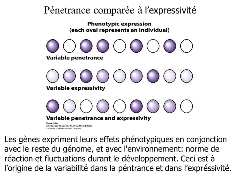 Pénetrance comparée à lexpressivité Les gènes expriment leurs effets phénotypiques en conjonction avec le reste du génome, et avec l'environnement: no