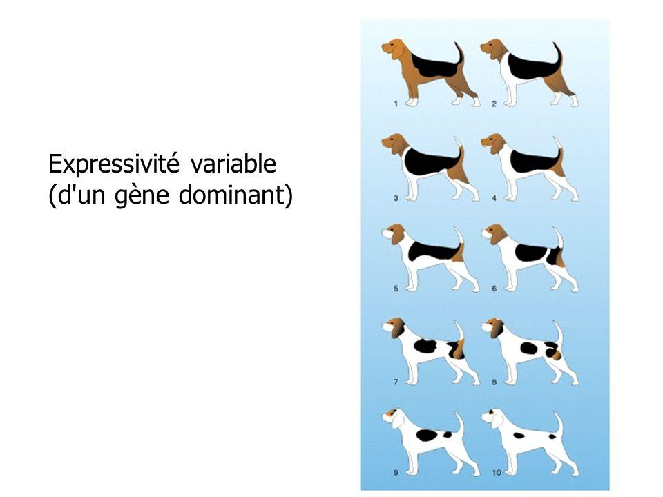 Expressivité variable (d'un gène dominant)