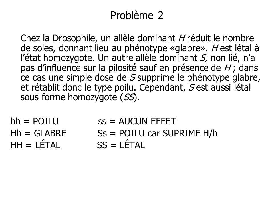 Problème 2 Chez la Drosophile, un allèle dominant H réduit le nombre de soies, donnant lieu au phénotype «glabre». H est létal à létat homozygote. Un