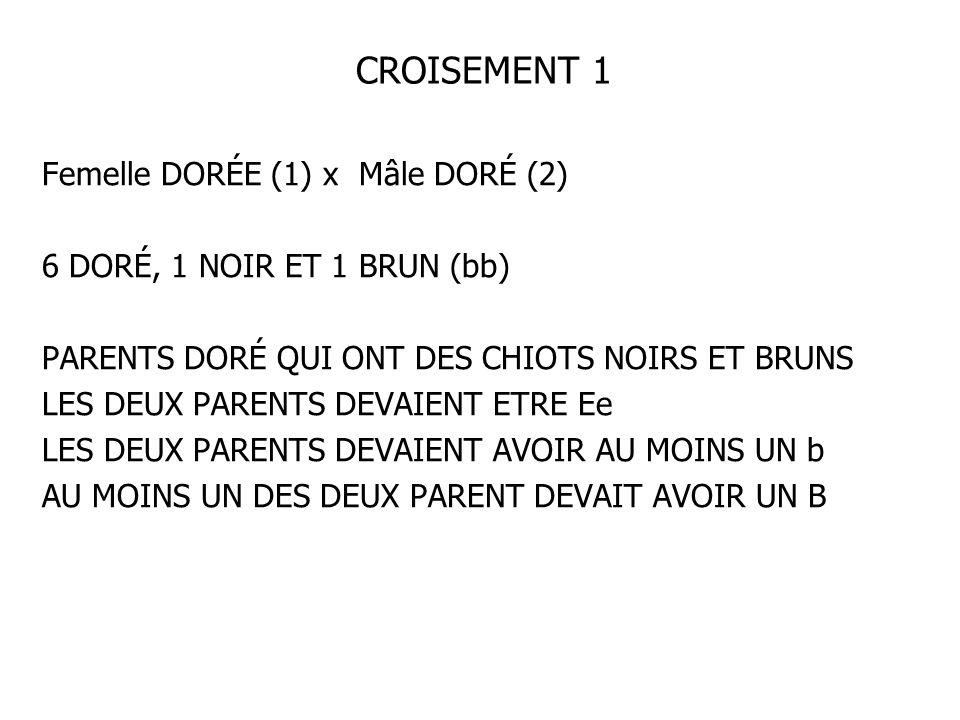 CROISEMENT 1 Femelle DORÉE (1) x Mâle DORÉ (2) 6 DORÉ, 1 NOIR ET 1 BRUN (bb) PARENTS DORÉ QUI ONT DES CHIOTS NOIRS ET BRUNS LES DEUX PARENTS DEVAIENT