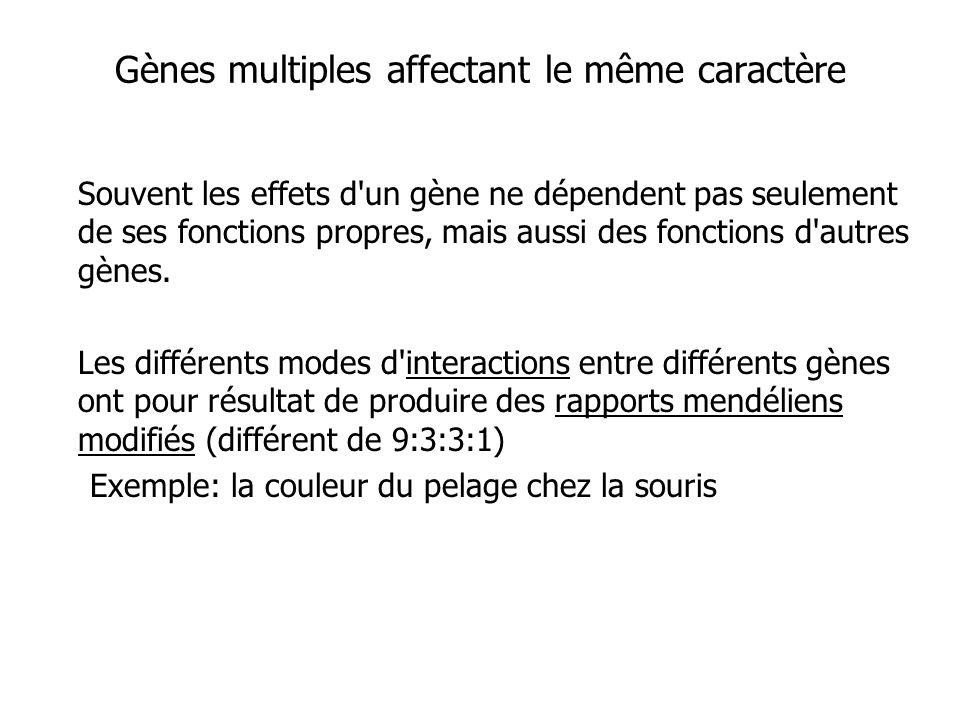 Gènes multiples affectant le même caractère Souvent les effets d'un gène ne dépendent pas seulement de ses fonctions propres, mais aussi des fonctions