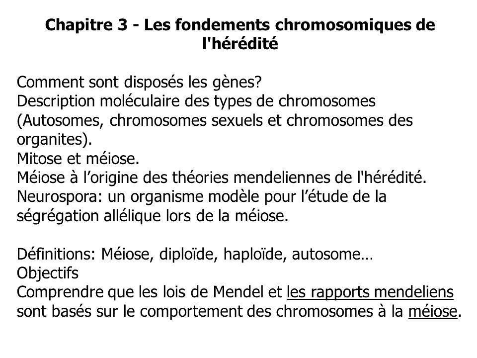 Chapitre 3 - Les fondements chromosomiques de l'hérédité Comment sont disposés les gènes? Description moléculaire des types de chromosomes (Autosomes,