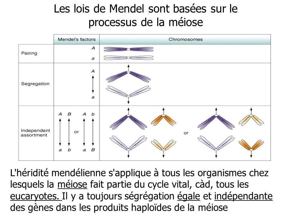 Les lois de Mendel sont basées sur le processus de la méiose L'héridité mendélienne s'applique à tous les organismes chez lesquels la méiose fait part