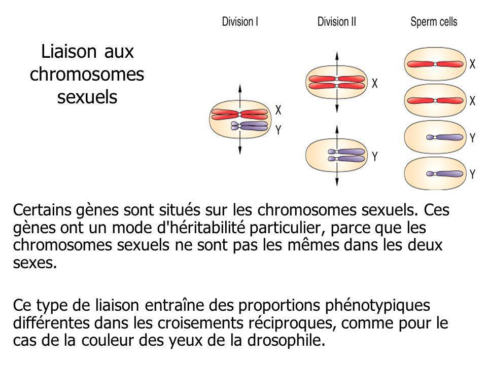 Liaison aux chromosomes sexuels Certains gènes sont situés sur les chromosomes sexuels. Ces gènes ont un mode d'héritabilité particulier, parce que le