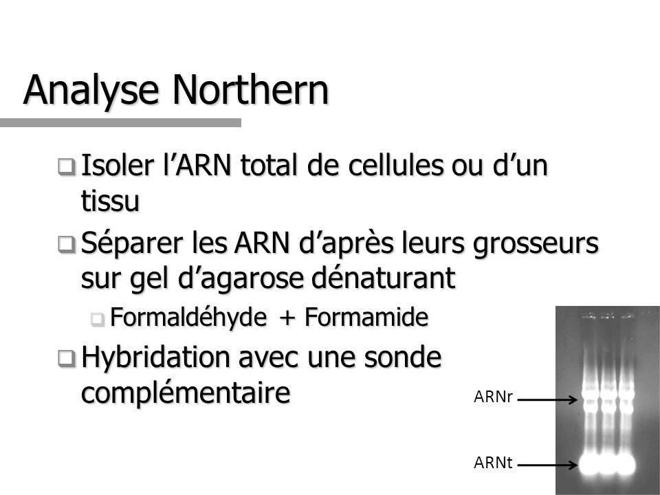 Analyse Northern Isoler lARN total de cellules ou dun tissu Isoler lARN total de cellules ou dun tissu Séparer les ARN daprès leurs grosseurs sur gel