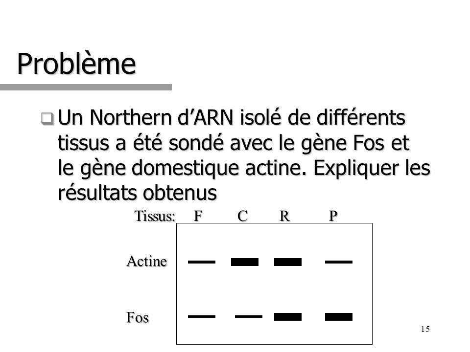 Problème Un Northern dARN isolé de différents tissus a été sondé avec le gène Fos et le gène domestique actine. Expliquer les résultats obtenus Un Nor