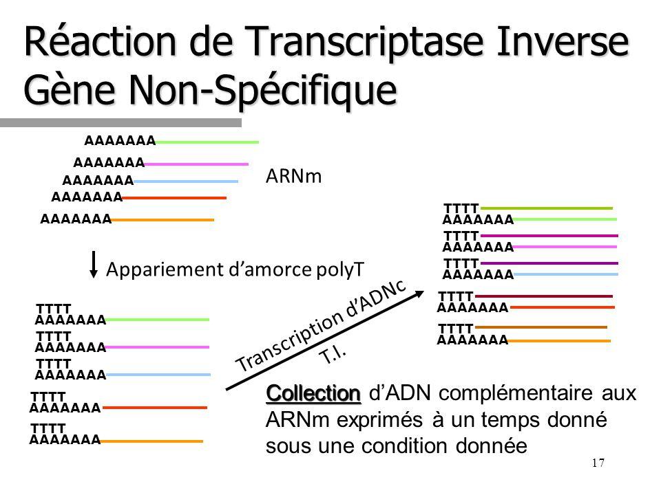 Réaction de Transcriptase Inverse Gène Non-Spécifique 17 AAAAAAA TTTT AAAAAAA TTTT AAAAAAA TTTT AAAAAAA TTTT AAAAAAA TTTT Appariement damorce polyT Co
