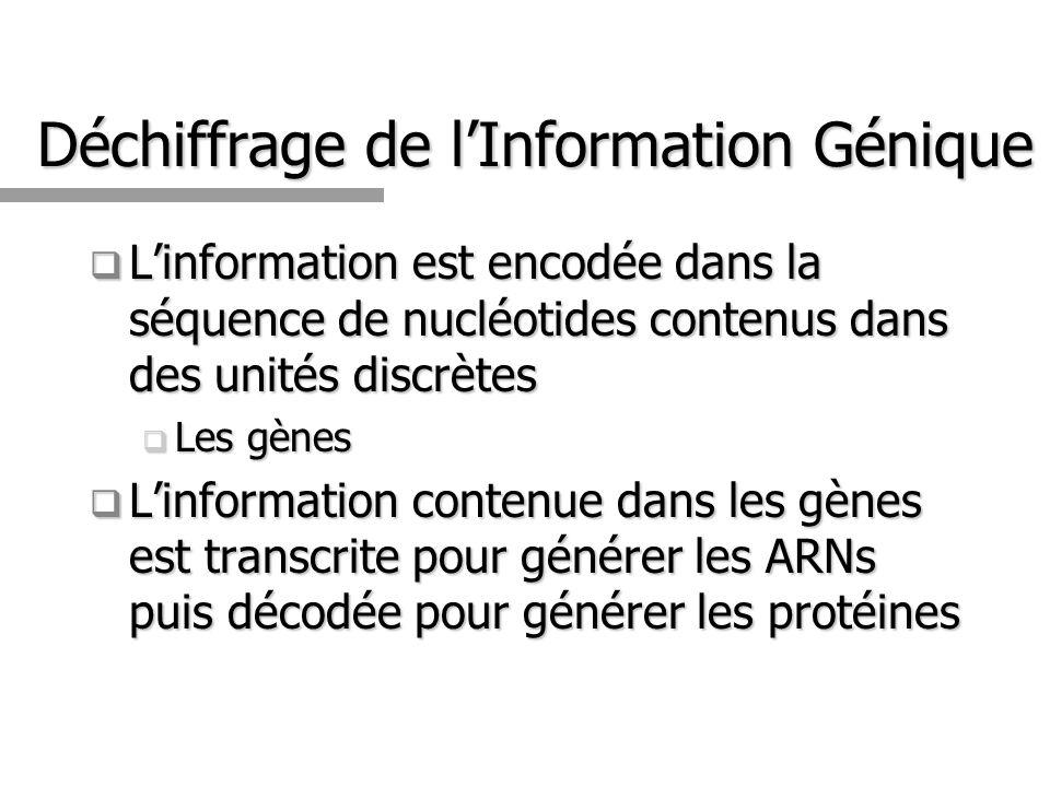 Déchiffrage de lInformation Génique Linformation est encodée dans la séquence de nucléotides contenus dans des unités discrètes Linformation est encod