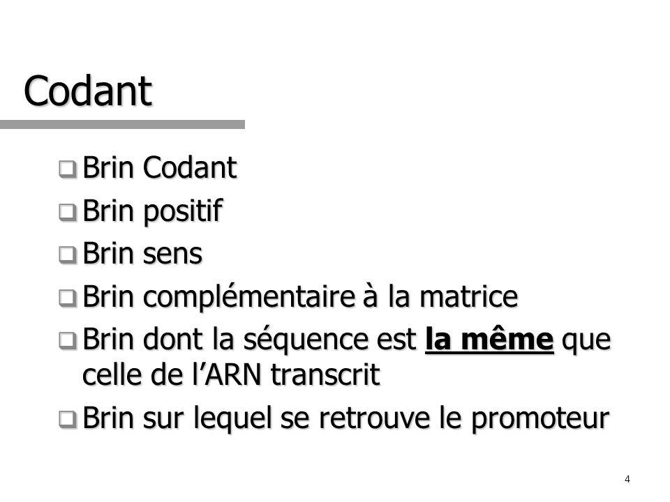 Codant Brin Codant Brin Codant Brin positif Brin positif Brin sens Brin sens Brin complémentaire à la matrice Brin complémentaire à la matrice Brin do