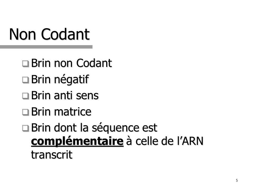 Non Codant Brin non Codant Brin non Codant Brin négatif Brin négatif Brin anti sens Brin anti sens Brin matrice Brin matrice Brin dont la séquence est