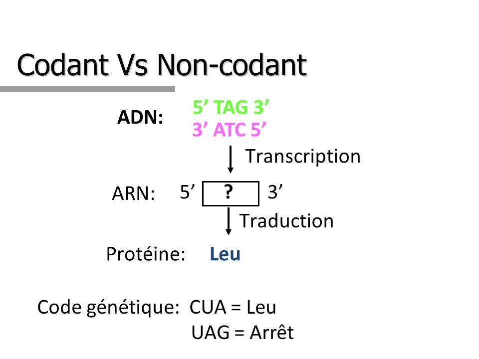 Codant Vs Non-codant ADN: 5 TAG 3 3 ATC 5 Traduction Leu Protéine: Code génétique: CUA = Leu UAG = Arrêt Transcription ARN: ?53