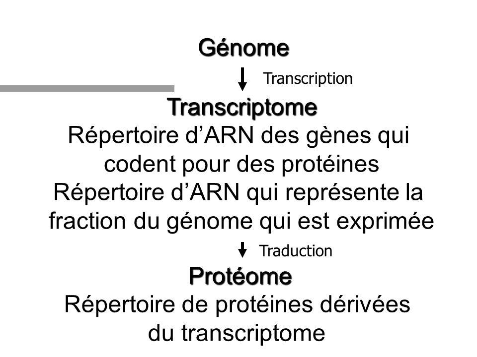 Génome Transcriptome Répertoire dARN des gènes qui codent pour des protéines Répertoire dARN qui représente la fraction du génome qui est exprimée Pro