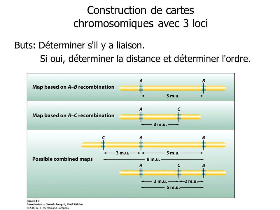 Construction de cartes chromosomiques avec 3 loci Buts: Déterminer s il y a liaison.