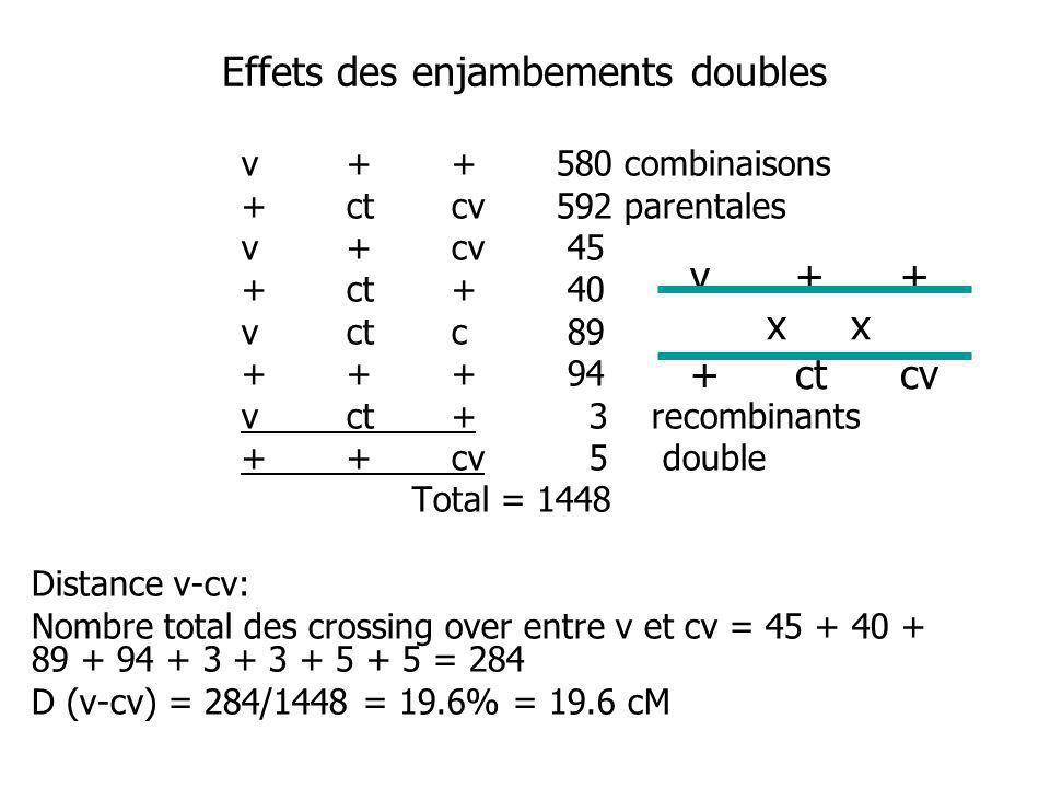 Effets des enjambements doubles v++580 combinaisons +ctcv592 parentales v+cv 45 +ct+ 40 vctc 89 +++ 94 vct+ 3 recombinants ++cv 5 double Total = 1448 Distance v-cv: Nombre total des crossing over entre v et cv = 45 + 40 + 89 + 94 + 3 + 3 + 5 + 5 = 284 D (v-cv) = 284/1448 = 19.6% = 19.6 cM v++ x x +ctcv