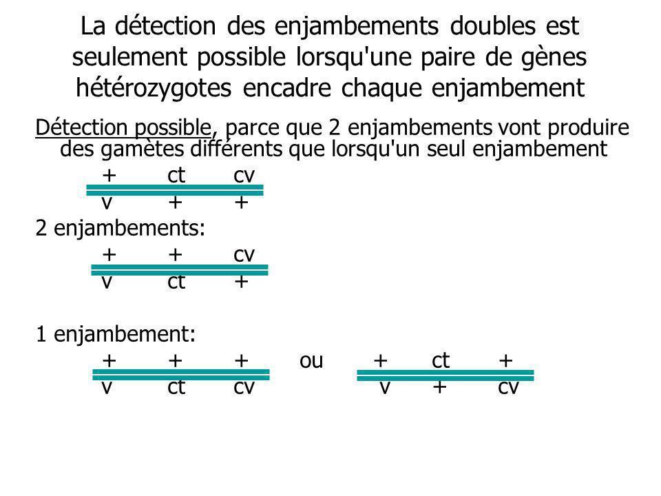 La détection des enjambements doubles est seulement possible lorsqu une paire de gènes hétérozygotes encadre chaque enjambement Détection possible, parce que 2 enjambements vont produire des gamètes différents que lorsqu un seul enjambement +ctcv v++ 2 enjambements: ++cv vct+ 1 enjambement: + ++ou +ct+ vctcv v+cv