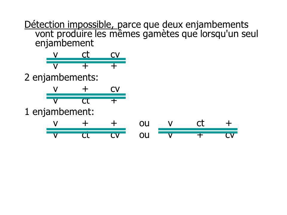 Détection impossible, parce que deux enjambements vont produire les mêmes gamètes que lorsqu un seul enjambement vctcv v++ 2 enjambements: v+cv vct+ 1 enjambement: v++ou vct+ vctcvou v+cv