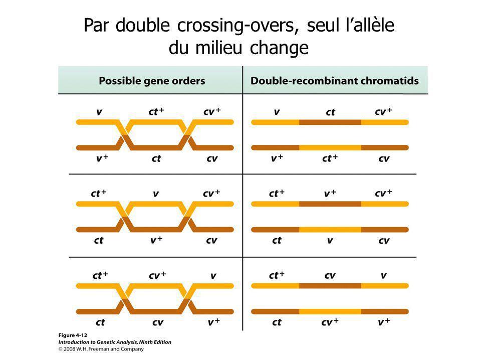 Par double crossing-overs, seul lallèle du milieu change