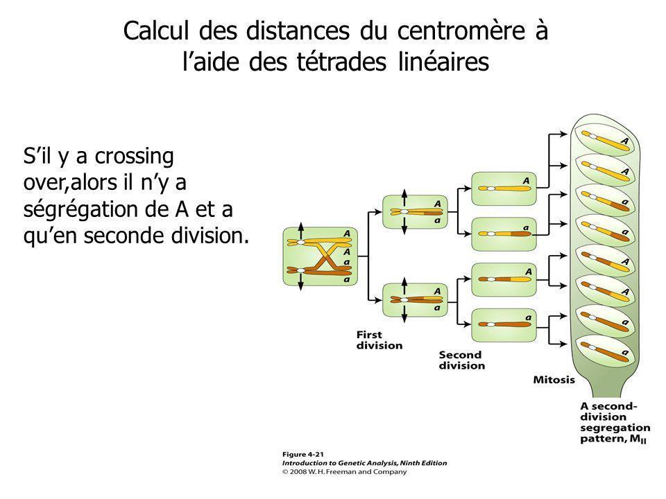 Calcul des distances du centromère à laide des tétrades linéaires Sil y a crossing over,alors il ny a ségrégation de A et a quen seconde division.