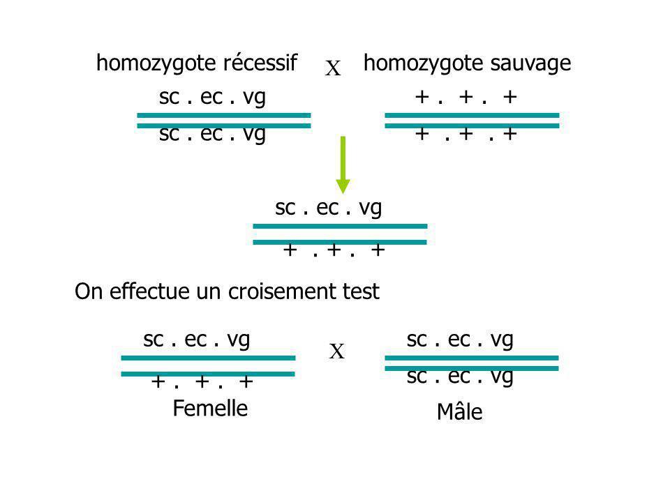 sc.ec. vg homozygote récessifhomozygote sauvage sc.