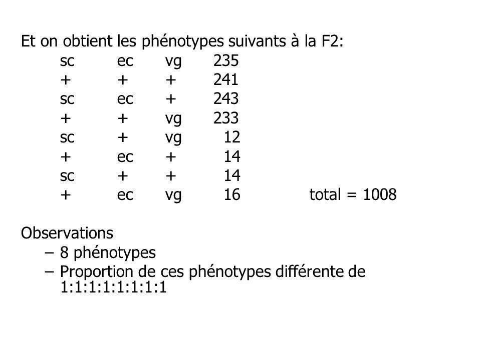 Et on obtient les phénotypes suivants à la F2: scecvg235 +++241 scec +243 ++vg233 sc+vg 12 +ec+ 14 sc++ 14 +ecvg 16total = 1008 Observations –8 phénotypes –Proportion de ces phénotypes différente de 1:1:1:1:1:1:1:1