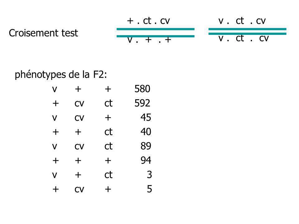 Conclusion: v et cv sont liés 45+40+89+94 = 18.5 cM 1448 v et ct sont liés 89+94+3+5 = 13.2 cM 1448 ct et cv sont liés 45+40+3+5 = 6.4 cM 1448 v ct cv 13.2 6.4