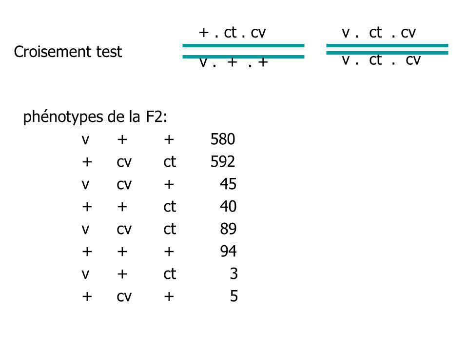 Croisement test +.ct. cv v. +. + v. ct.