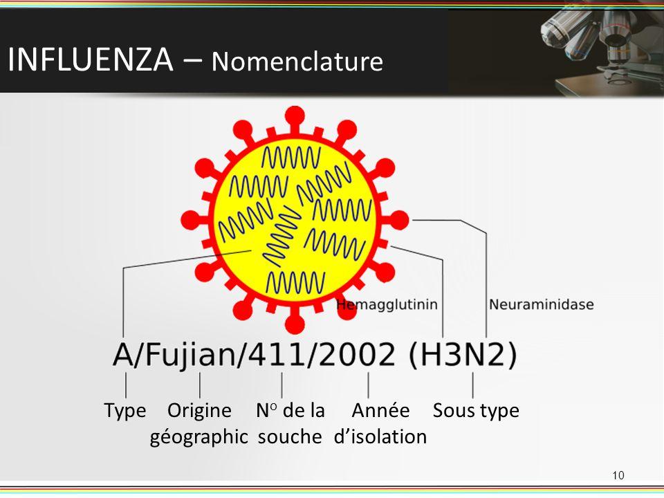 INFLUENZA – Nomenclature 10 TypeOrigine géographic N o de la souche Année disolation Sous type